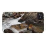 Cascada de Alaska del otoño del AAW Case-Mate iPhone 4 Coberturas