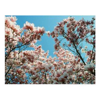 Cascada del flor tarjeta postal