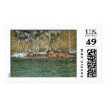 Cascada del hipopótamo franqueo