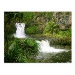 Cascada hawaiana 2 con gradas tarjeta postal