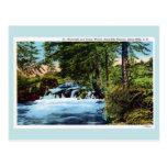 Cascada, maderas, barranco del Spearfish, Black Postales