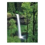 Cascada rodeada por verdes enormes postal