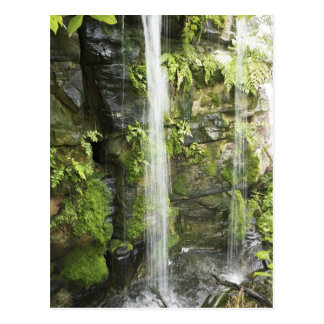 Cascada, selva tropical templada, Nueva Zelanda. Postal