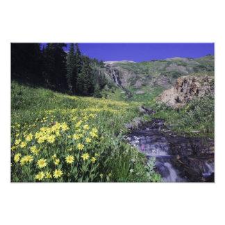 Cascada y wildflowers en prado alpino, 2 cojinete