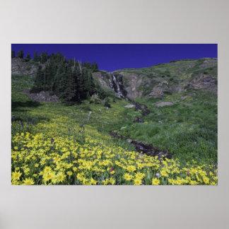 Cascada y wildflowers en prado alpino, 3 impresiones