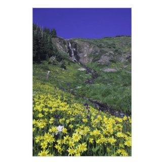 Cascada y wildflowers en prado alpino, cojinete