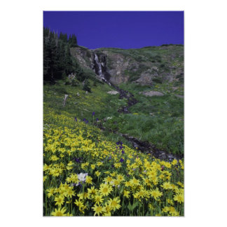 Cascada y wildflowers en prado alpino, posters