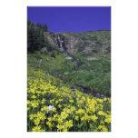 Cascada y wildflowers en prado alpino, impresión fotográfica