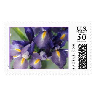Cascade Iris Photo Stamp