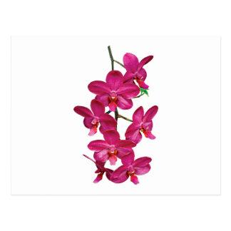 Cascade Magenta Orchids Postcard