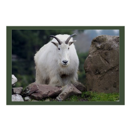 Cascade Mountain Goat Posters