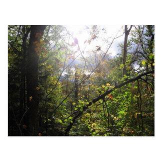 cascade mountain postcard