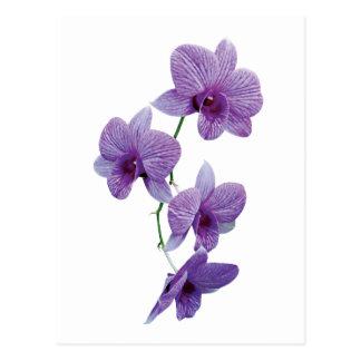Cascade of Purple Orchids Postcard