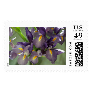 Cascade Purple Iris Flower Postage Stamps