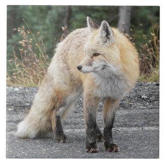 Cascade Red Fox Photo Ceramic Tile