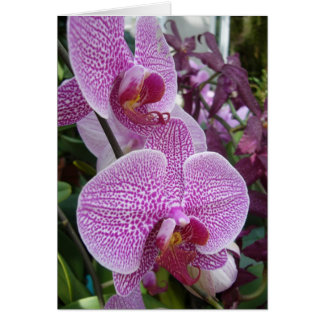 Cascading Orchids Card