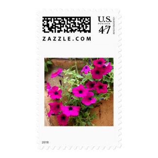 Cascading Purple Petunias Postage