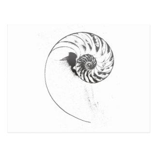 Cáscara 1 del nautilus tarjetas postales