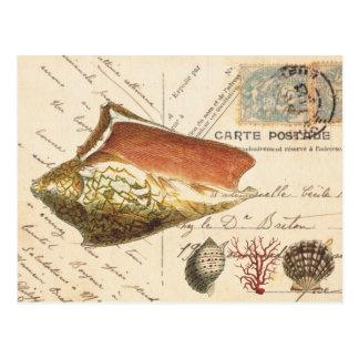 Cáscara de la concha del vintage y postal de los s
