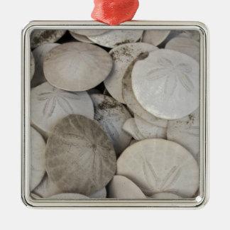 Cáscara del mar de los dólares de arena adorno cuadrado plateado