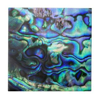 Cáscara del paua del olmo azulejo cuadrado pequeño