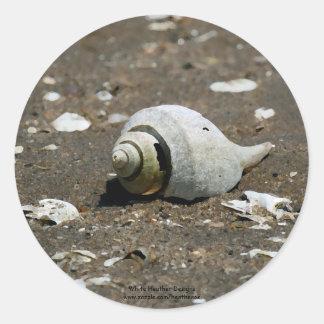 Cáscara en la playa - pegatinas del bucino pegatina redonda