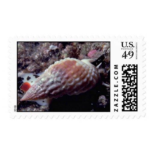 Cáscara granuda de la cesta (papillosus) de sellos