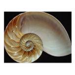 Cáscara magnífica del nautilus postales