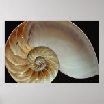 Cáscara magnífica del nautilus poster