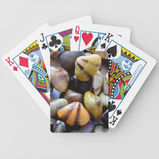 Cáscaras coloridas minúsculas de la almeja barajas de cartas