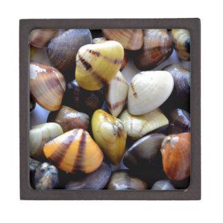 Cáscaras coloridas minúsculas de la almeja caja de joyas de calidad
