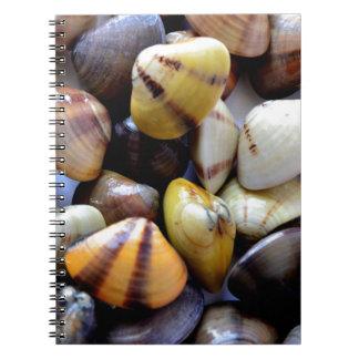 Cáscaras coloridas minúsculas de la almeja libreta espiral