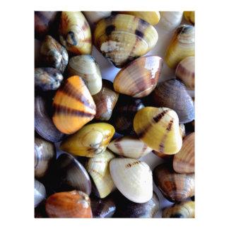 Cáscaras coloridas minúsculas de la almeja plantillas de membrete