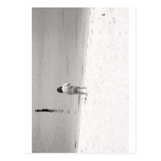 Cáscaras del mar de la caza de la niña en la playa postal
