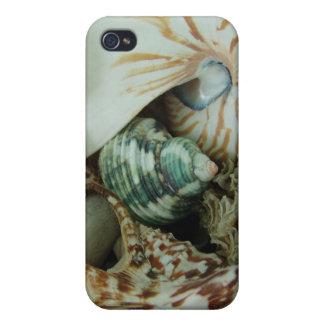Cáscaras del mar de la Florida iPhone 4/4S Carcasas