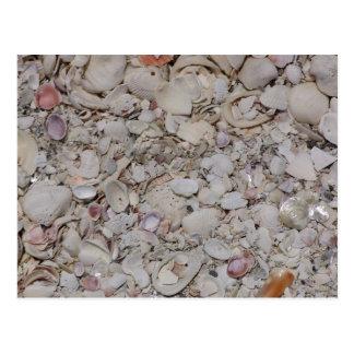 Cáscaras del mar del sanibel postal