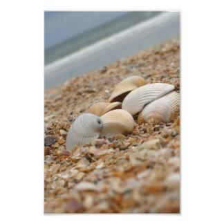Cáscaras del mar en imágenes imaginativas de la fo fotografía