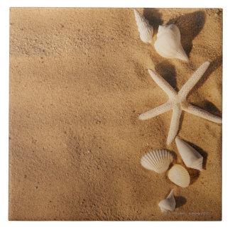 Cáscaras del mar en la arena azulejo ceramica