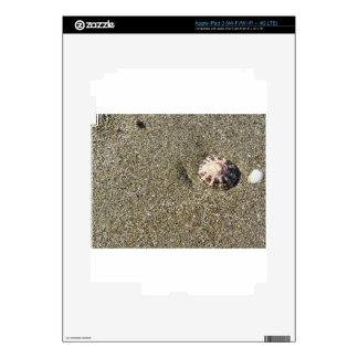 Cáscaras del mar en la arena. Fondo de la playa Pegatinas Skins Para iPad 3