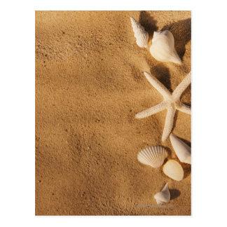Cáscaras del mar en la arena postales