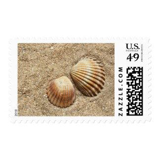 Cáscaras del mar en sellos de la arena