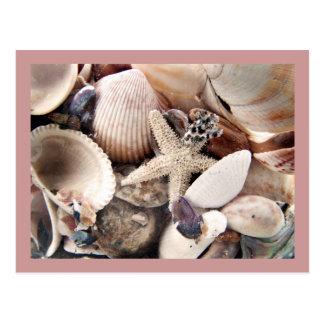 Cáscaras del mar por la orilla tarjetas postales