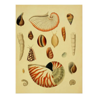 Cáscaras del mar póster