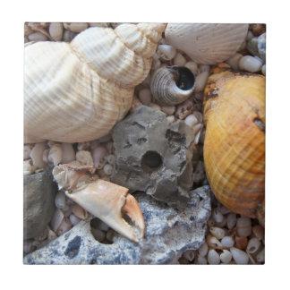 Cáscaras del mar sobre la playa azulejo