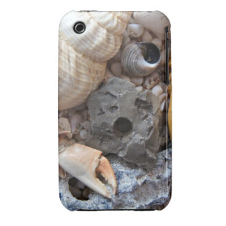 Cáscaras del mar sobre la playa iPhone 3 funda