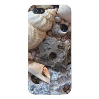 Cáscaras del mar sobre la playa iPhone 5 carcasa