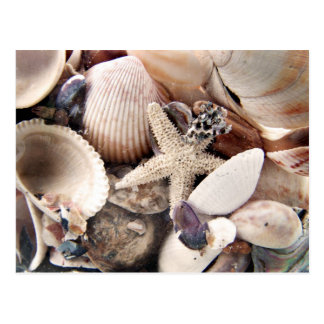 Cáscaras del mar tarjeta postal