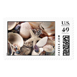 Cáscaras del mar timbres postales