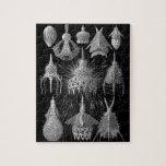 Cáscaras del plancton en blanco y negro (Cyrtoidea Puzzle Con Fotos