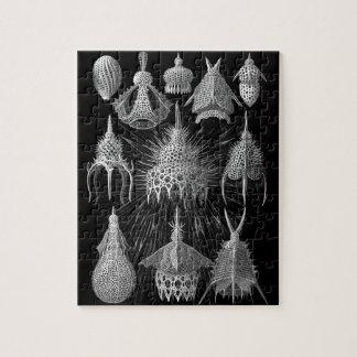 Cáscaras del plancton en blanco y negro (Cyrtoidea Rompecabezas